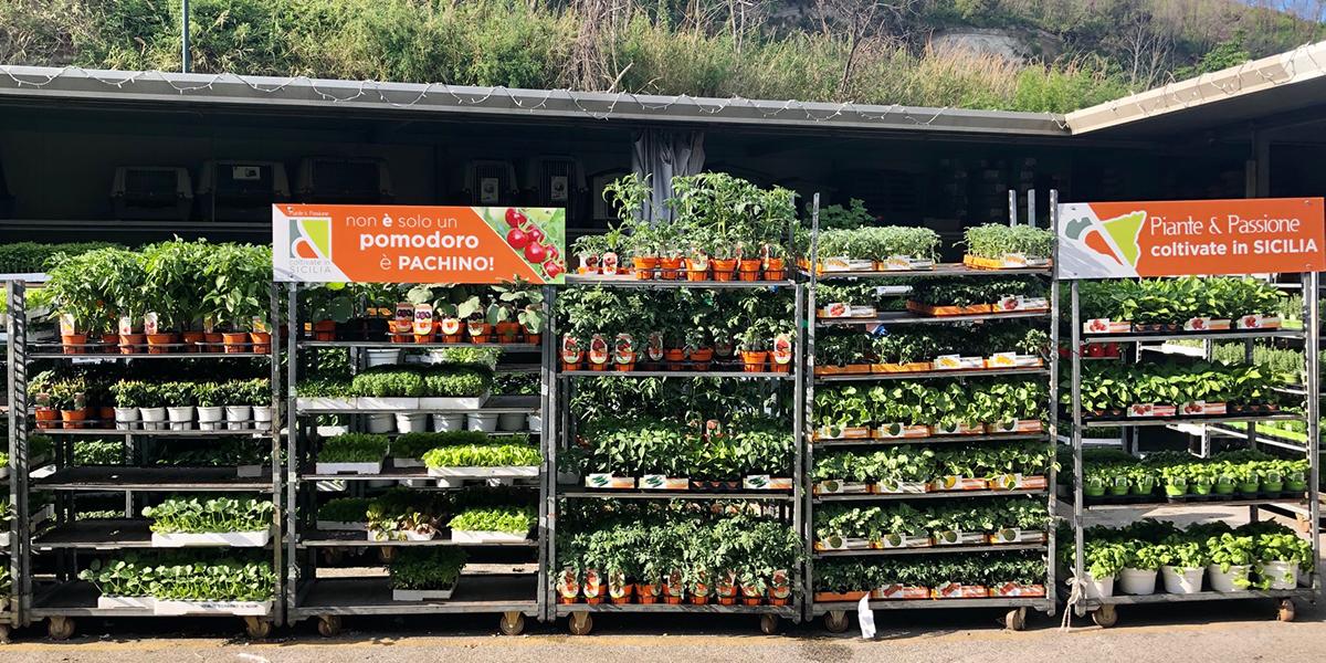 Assortimento piante da orto