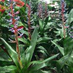 Piante tropicali sempre ricercate.