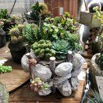 Composizione piante grasse by Cactusmania.