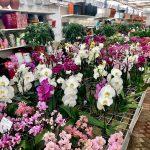 Orchidee per tutti i gusti!